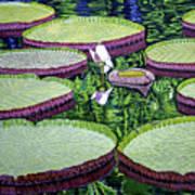 Giant Lily Art Print