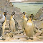 Giant Penguins, C1900 Art Print