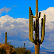 Giant Saguaro In The Southwest Desert  Art Print