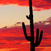 Giant Saguaro  Southwest Desert Sunset Art Print