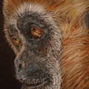 Gibbon Art Print