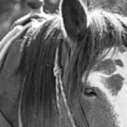 Gillagan The Horse In Glacier National Park   Art Print