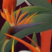 Ginger And Bird Of Paradise Art Print