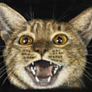 Ginger Cat Eyes Art Print
