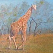 Giraffe - Safari - Summer 2008 Art Print