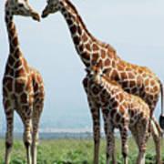 Giraffe Family Art Print by Sallyrango