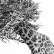 Giraffe Hide And Seek Art Print