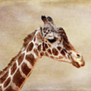Giraffe Portrait With Texture Art Print