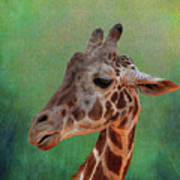 Giraffe Square Painted Art Print
