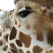 Giraffe Up Close Art Print