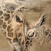 Giraffes, Big And Small Art Print