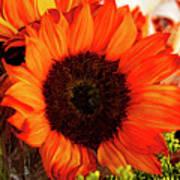 Girasol Naranja Art Print