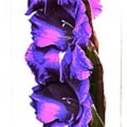 Glad I'm Purple Art Print