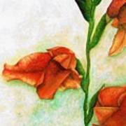 Gladiolas Art Print
