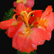 Gladiolus Bloom - Digital Art Art Print