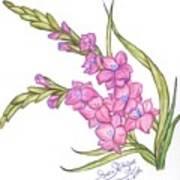 Gladiolus Pink Art Print