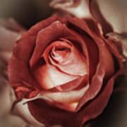 Glamorous Rose Art Print