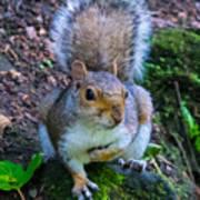 Glasgow Squirrel Art Print