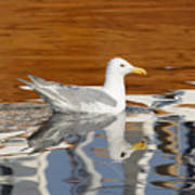 Glaucous-winged Gull Art Print
