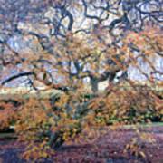 Glen Park Manor Garden Art Print