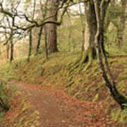 Glengarry Forest Scotland Art Print