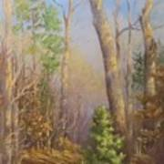 Glenmoor Woods, Sunset Art Print
