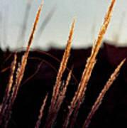 Glistening Grass Art Print