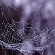 Glistening Web Art Print