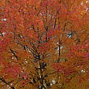 Glorious Autumn Art Print
