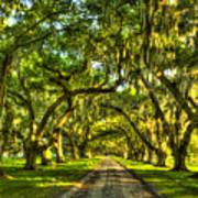Glorious Entrance Tomotley Plantation South Carolina  Art Print