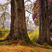 Glorious Fall In Benmore Botanical Garden. Scotland Art Print
