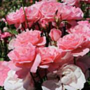 Glorious Pink Roses Art Print