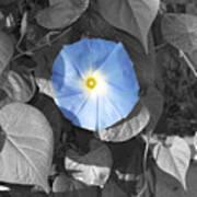 Glory Blue Art Print