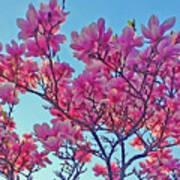 Glowing Magnolia Art Print