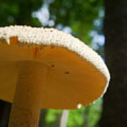 Glowing Mushroom Cap Art Print