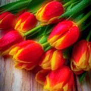 Glowing Tulips Art Print