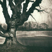 Gnarled Old Tree Art Print