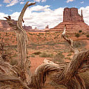 Gnarled Tree At Monument Valley  Art Print