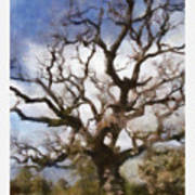 Gnarled Tree Open Sky Art Print