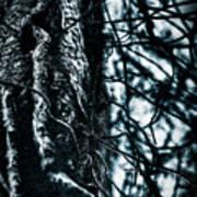 Gnarled Vines Surround A Tree Art Print