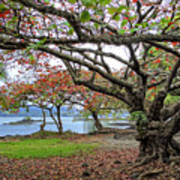 Gnarly Trees Of South Hilo Bay - Hawaii Art Print