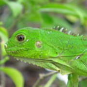 Go Iguana Green Art Print