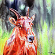 Goat From The Mountain Art Print