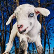 Goat High Fashion Runway Art Print
