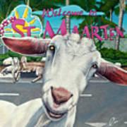 Goats Of St. Maarten- Sofie Art Print