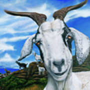 Goats Of St. Martin Art Print