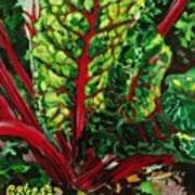 God's Kitchen Series No 7 Swiss Chard Art Print