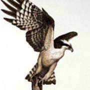 Going Fishin' Osprey Art Print