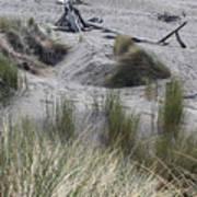 Gold Beach Oregon Beach Grass 15 Art Print