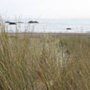 Gold Beach Oregon Beach Grass 7 Art Print